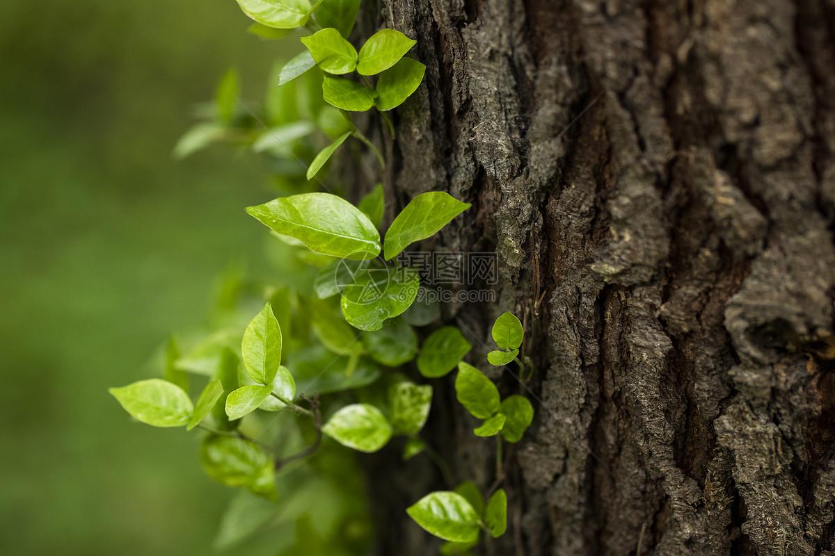 长嫩芽的大树图片