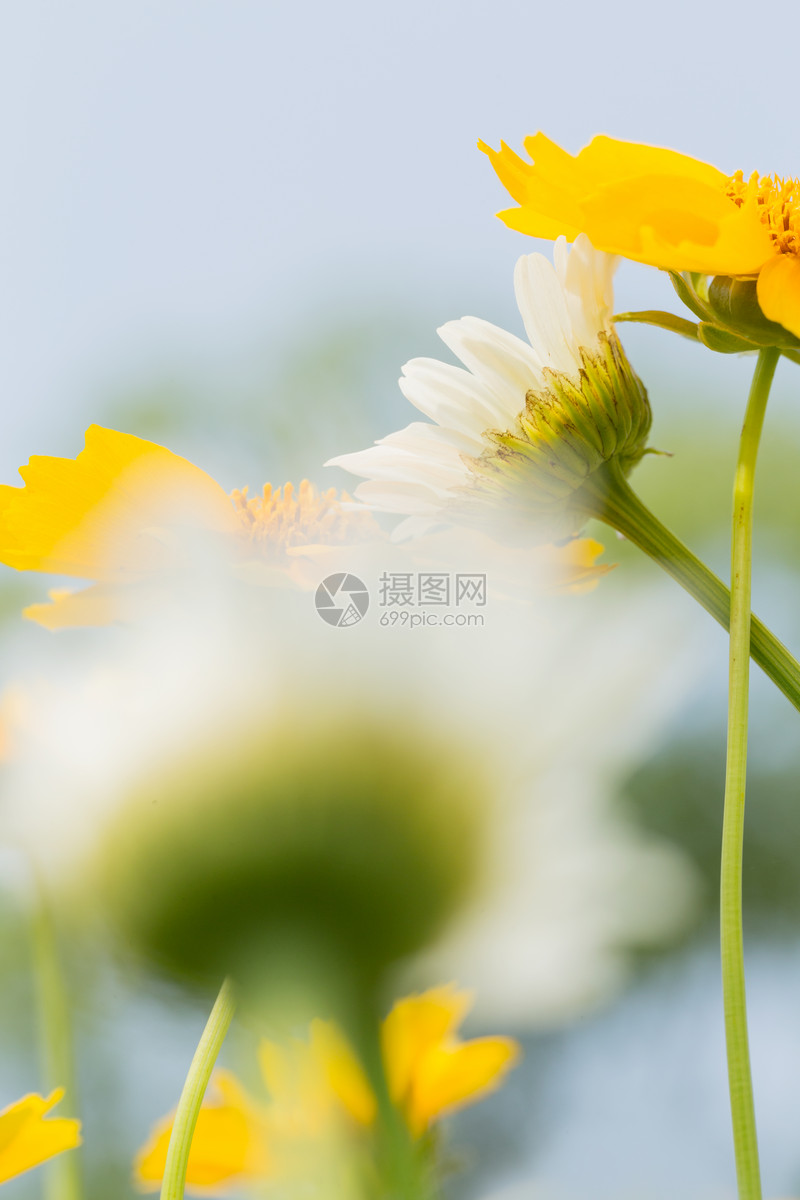 唯美花朵清新背景图片