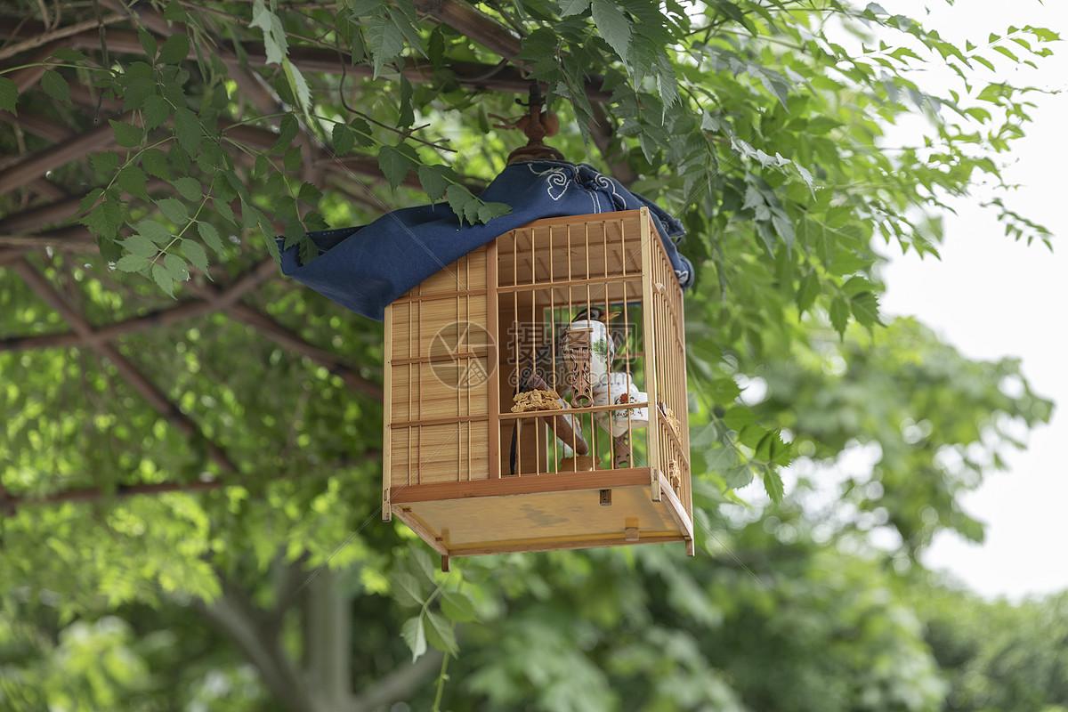 挂在树上的鸟笼图片