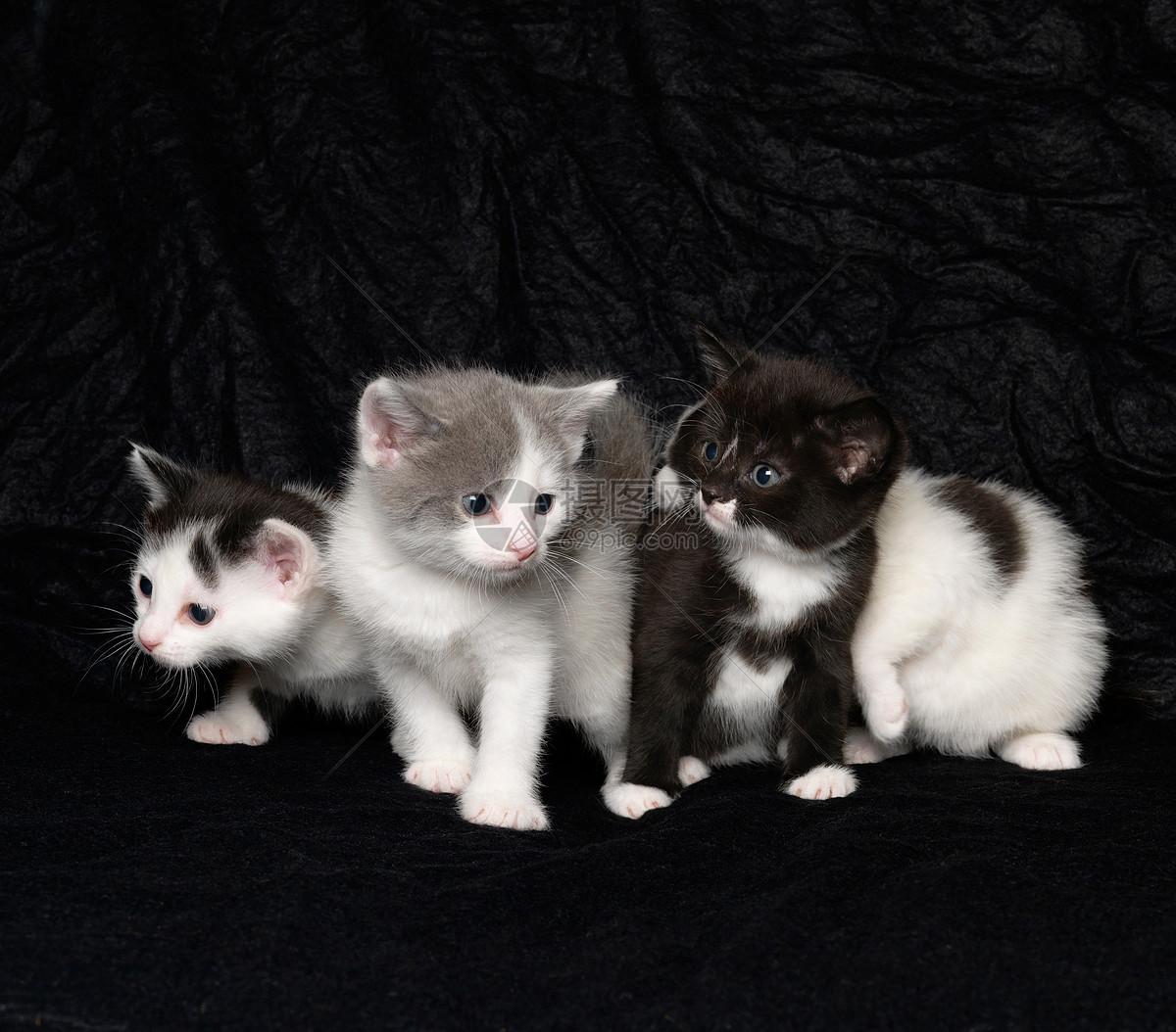 黑色背景的小猫图片