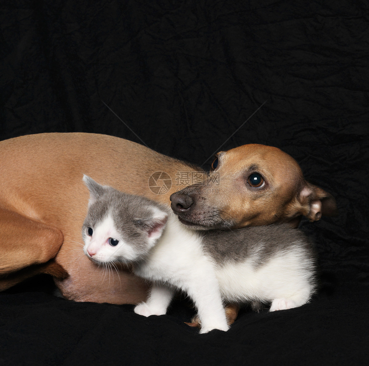 黑色背景的猫和狗图片
